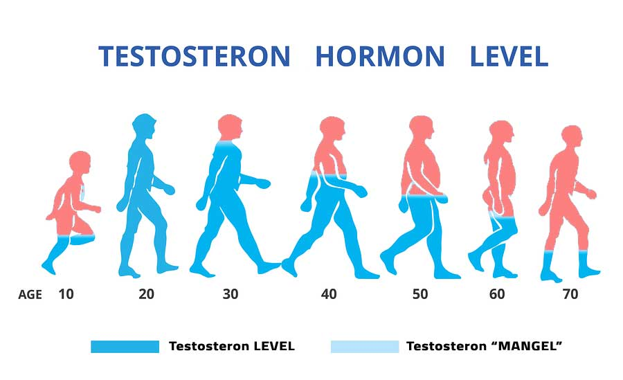 Testosteron Hormon Level